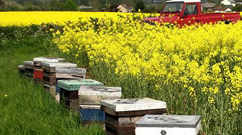 Sedgemoor Honey Hives out and about